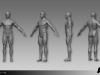 APB_HighRes_M_Body_Muscular